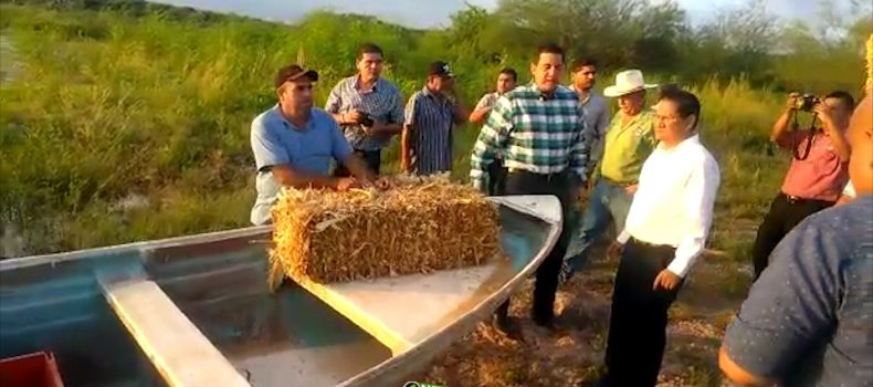 PRETENDEN ENGORDAR TILAPIAS EN LA PRESA CON ESQUILMOS AGRICOLAS