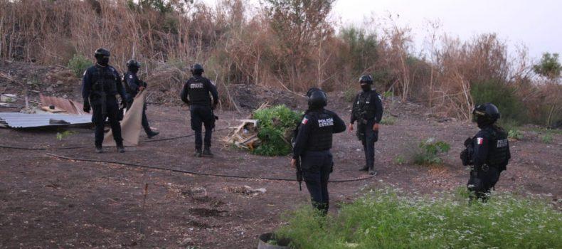 Policías Estatales aseguran plantío en Culiacán; podría tratarse de alguna droga