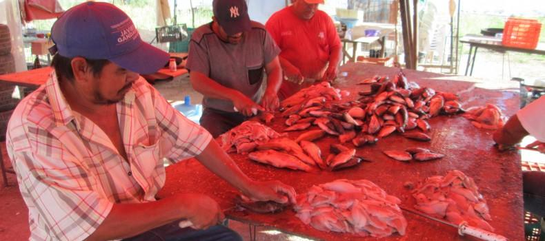 Sin esperanza pescadores pese a la siembra de alevines