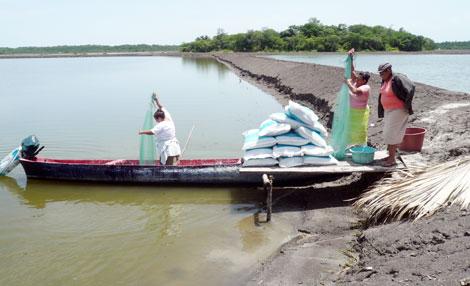 Acuicultores de Angostura dicen estar dispuestos para colocar los excluidores en las granjas camaroneras