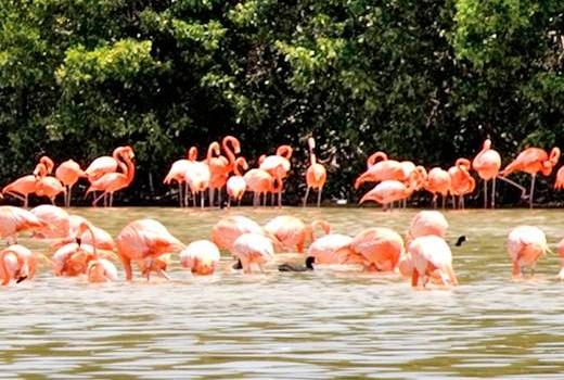 Arriban a la costa sinaloense más de 200 especies de aves migratorias