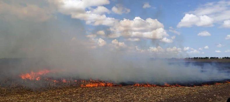 """Policía Ambiental detiene """"in fraganti"""" a una persona cuando quemaba maleza"""